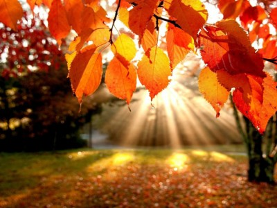 Прекрасни цитати за есента кои ќе ве убедат да го засакате ова годишнo време