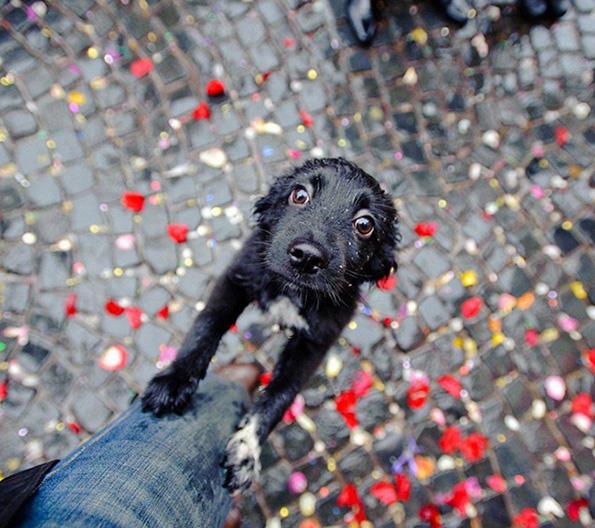 (12) Дали знаете зошто вашето куче е посреќно од вас?