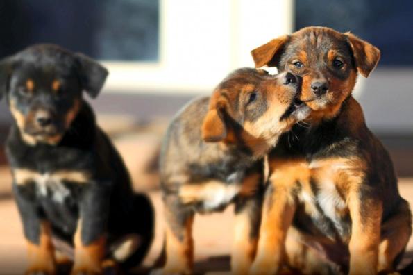 (13) Дали знаете зошто вашето куче е посреќно од вас?
