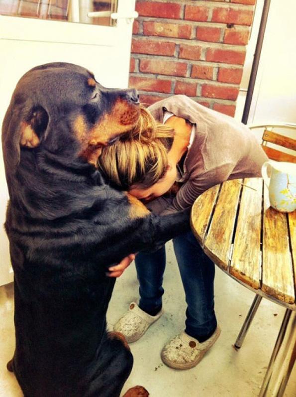 (15) Дали знаете зошто вашето куче е посреќно од вас?