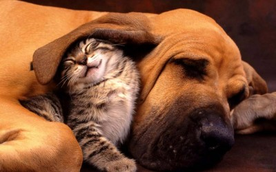 Неодоливи фотографии што ја покажуваат љубовта меѓу мачките и кучињата