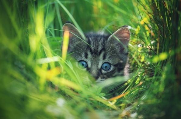 Како изгледа светот низ очите на различни животни?