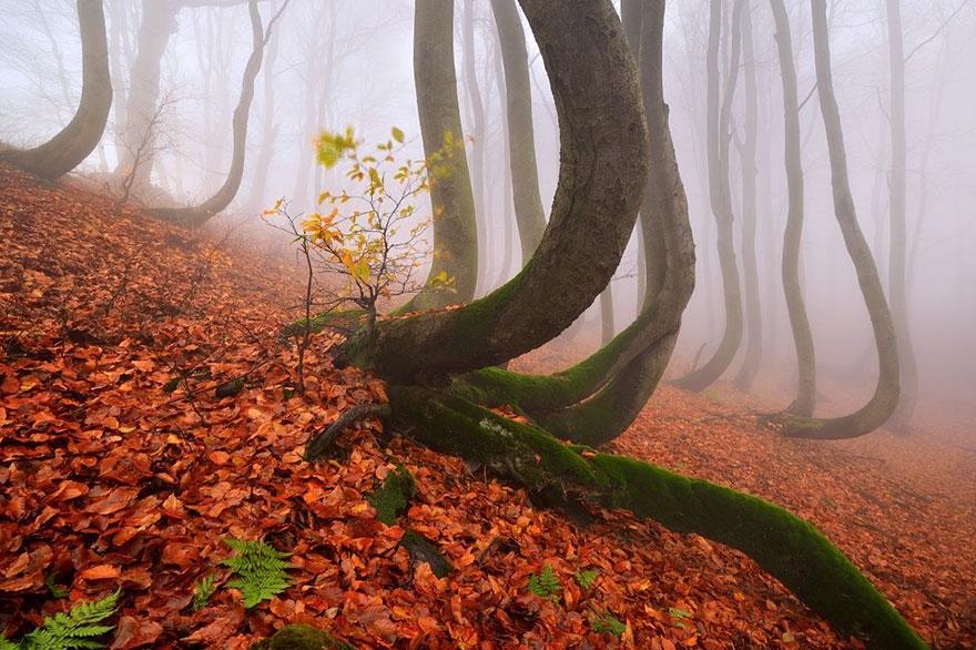 (1) Научник тврди дека дрвјата имаат способност да формираат врски и да се чуваат едни со други