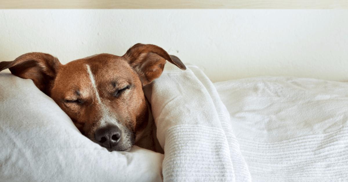 Што сонуваат кучињата? Нивните соништа ќе ви го стопат срцето!