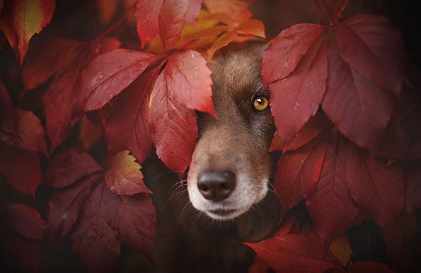 Кучиња - Page 6 1-uzhivanje-vo-esen-fotograf-pokazhuva-portreti-na-kuchinja