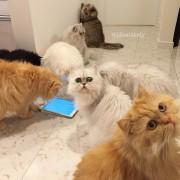 Мачките ги проверуваат коментарите од нивните следбеници на Инстаграм