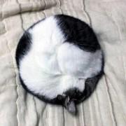 Маче кое спие...