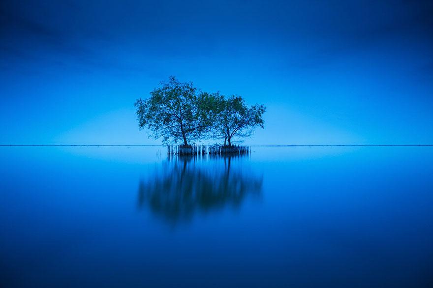 (2) Научник тврди дека дрвјата имаат способност да формираат врски и да се чуваат едни со други