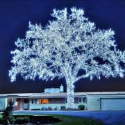40.000 светилки и совршено дрво