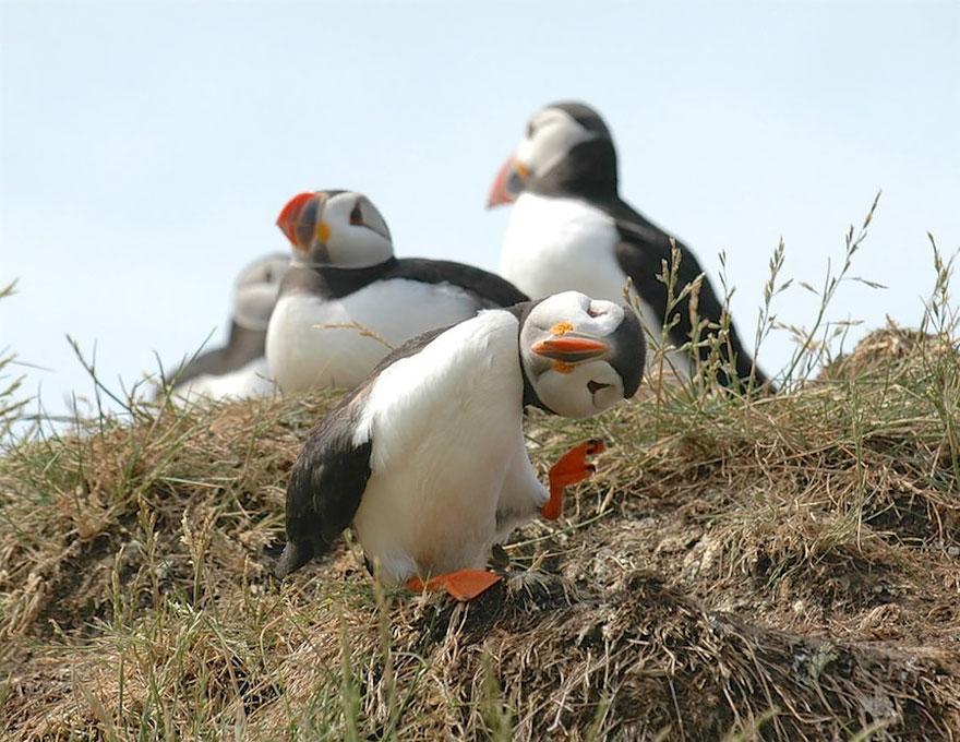(3) Овие фотографии се доказ дека и животните доживуваат непријатни и смешни ситуации