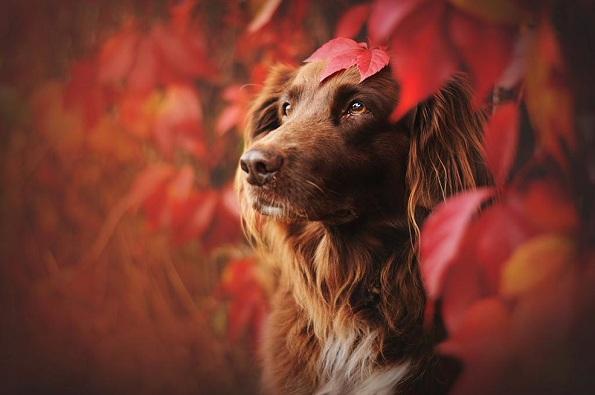Кучиња - Page 6 3-uzhivanje-vo-esen-fotograf-pokazhuva-portreti-na-kuchinja