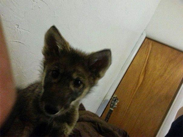 Тој мислел дека посвоил куче, но набрзо дознал дека станува збор за нешто сосема друго