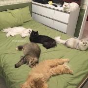 Потоа сѐ си се одвива нормално: Попладневна дремка на креветот на сопственичката