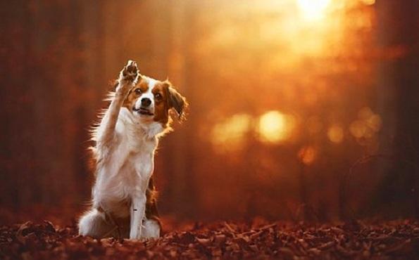 Кучиња - Page 6 7-uzhivanje-vo-esen-fotograf-pokazhuva-portreti-na-kuchinja