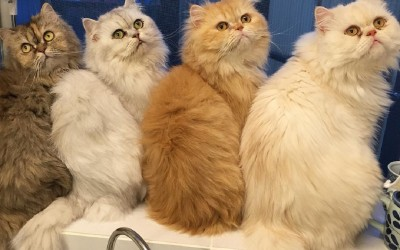 Како изгледа еден обичен ден на жена која чува 12 мачки?