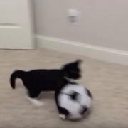 Мачка тренира фудбал!