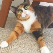 Оваа мачка со веѓи изгледа како да ги осудува сите околу неа
