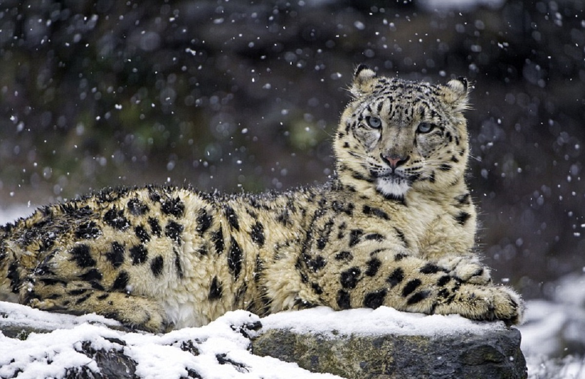 10 најретки животински видови во светот