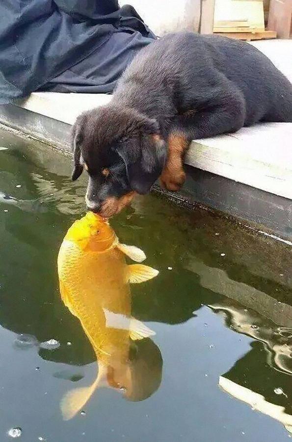 Кученце кое бакнува риба стана главна мета на Фотошоп експертите