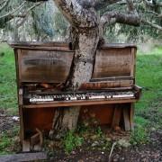 Стебло во клавир, Калифорнија