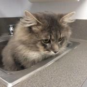 Првата егзистенцијална криза по првата посета кај ветеринарот...