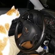Оваа мачка едноставно влегла во автомобилот и не му дозволила на човекот да си замине без неа! Ете така се наоѓа нов сопственик!