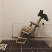 Мачката како да се здебелила малку...