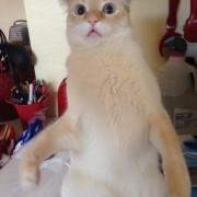 Сте се обиделе да ѝ замјаукате на вашата мачка? Веројатно ова е реакцијата што сте ја добиле...