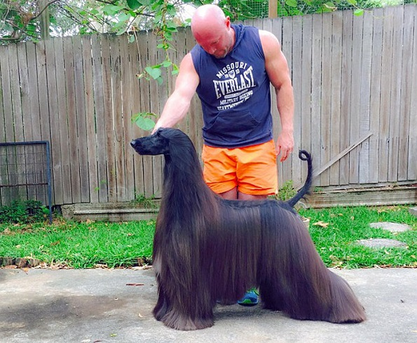 Не ќе можете да му одолеете: Запознајте се со најубавото куче во светот