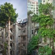 Победа на стеблата над бетонот