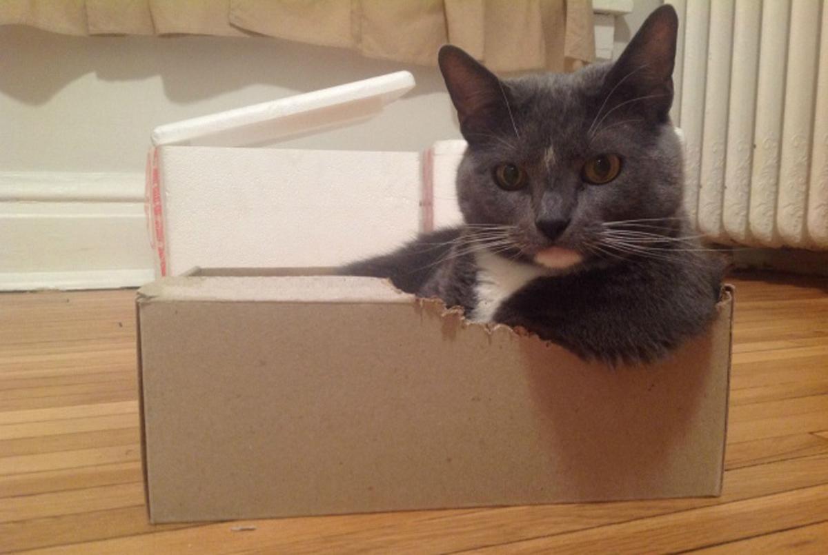 Смешни и неодоливи мачки кои се родени да станат ѕвезди