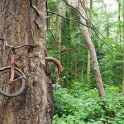 """Велосипед """"изеден"""" од стеблото"""