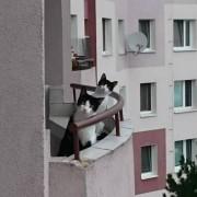Замислете си да имате вакви соседи!