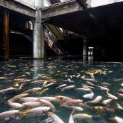 Природен аквариум во напуштен трговски центар во Тајланд