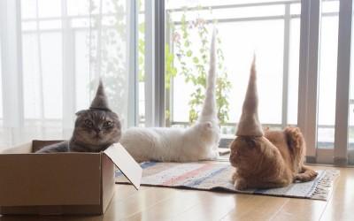 Креативни фотографии од мачки со шапки направени од нивното сопствено крзно