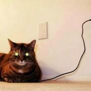 Оваа мачка е сега целосно наполнета!