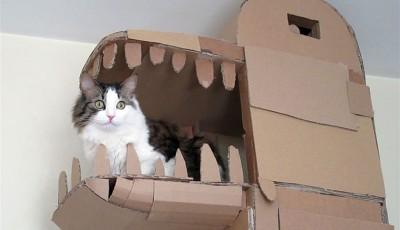 Како да ги задоволите потребите на вашата мачка? Изградете ѝ куќичка во форма на змеј!