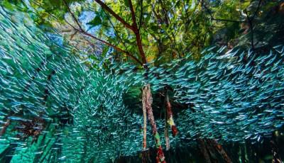 Погледнете ги најдобрите фотографии под вода за 2016 година