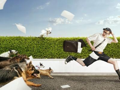 Како да реагирате ако ве нападне куче?