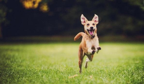 10 имиња на кучиња кои носат среќа