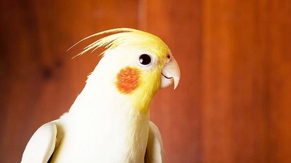 Неверојатни придобивки кои ќе ги имате доколку чувате птица како ваш домашен миленик