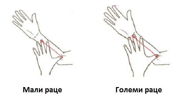 Измерете ги вашите раце и дознајте важни карактеристики за себе