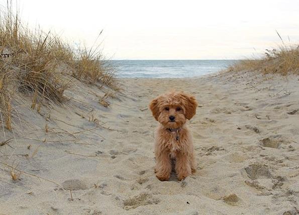 Неколку трикови кои ќе ви помогнат подобро да го фотографирате вашето куче