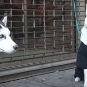 Социјален експеримент: Што би направиле луѓето ако видат напуштени кучиња на улица?
