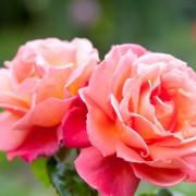 Тест кој има моќ да ја прочита вашата личност: Изберете цвет и дознајте нешто за себе