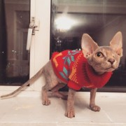 Мачка со едно око која ќе ве плени со нејзината убавина