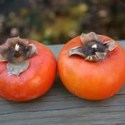1-japonska-jabolka-slatko-topche-kako-med-koe-puka-od-zdravje-www.kafepauza.mk_