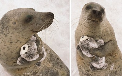 Нема да можете да им одолеете на овие слатки животинчиња кои спијат со играчки!