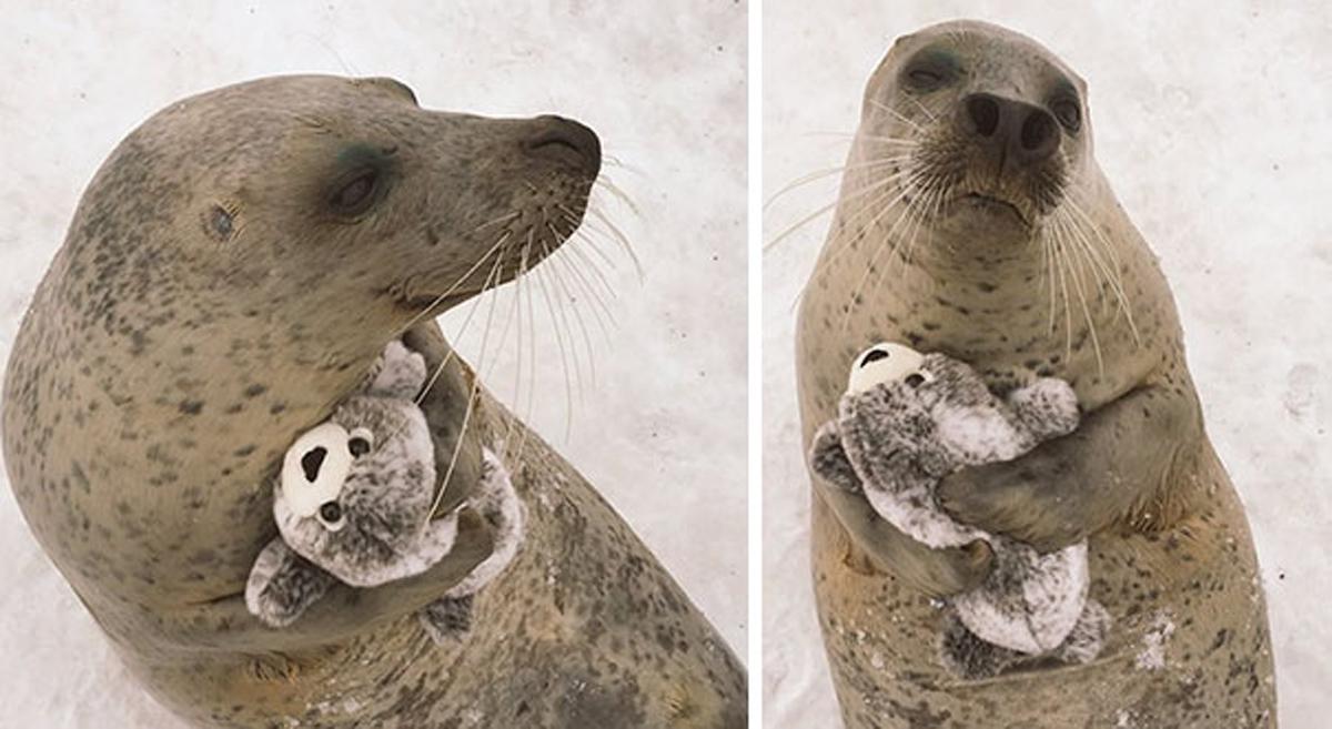 Нема да можете да им одолеете на овие слатки животинчиња кои спијат со играчки