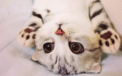 Запознајте ја Хана: Маче со неодоливи крупни очи кое ги освои социјалните мрежи